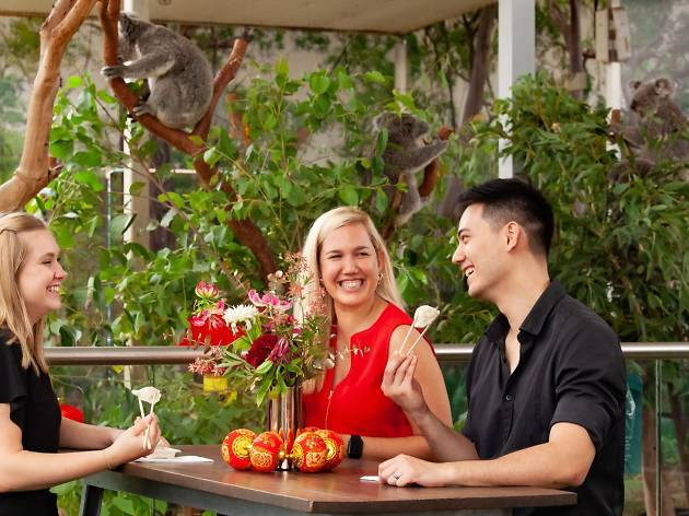All-you-can-eat Dumplings with Koalas