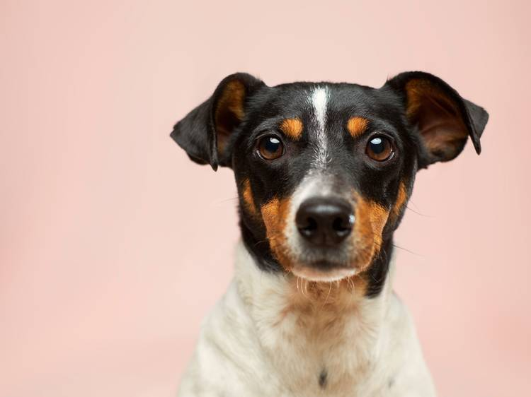 The best pet adoption NYC families will love