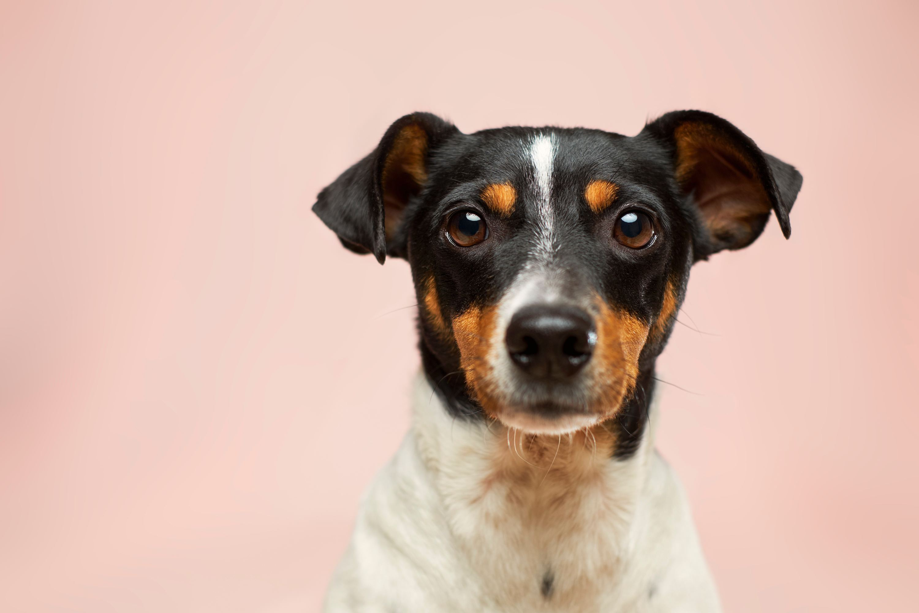 11 Best Spots For Pet Adoption Nyc Families Need To Explore