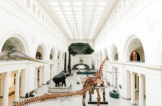 The Field Museum, Maximo