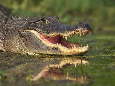 Make it snappy! London could be getting an alligator park in an old gasholder