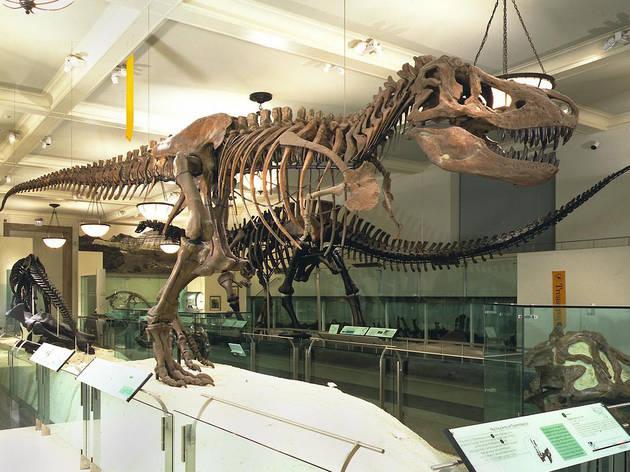 American Museum of Natural History's Dinosaur Halls