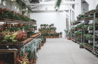 Maison Bouture jardín efímero