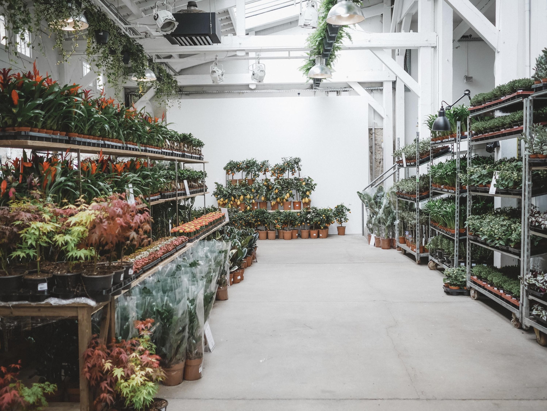 Regresa el mercado efímero de las plantas a Malasaña