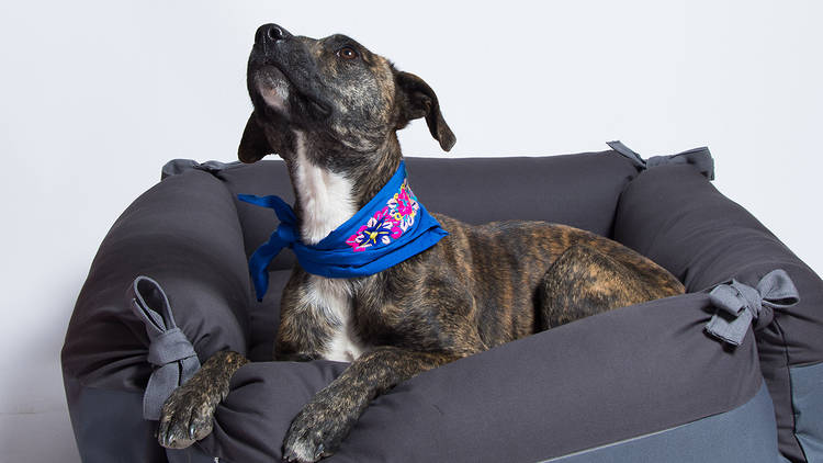 Canuto, productos para perros en colaboración con artesanos mexicanos