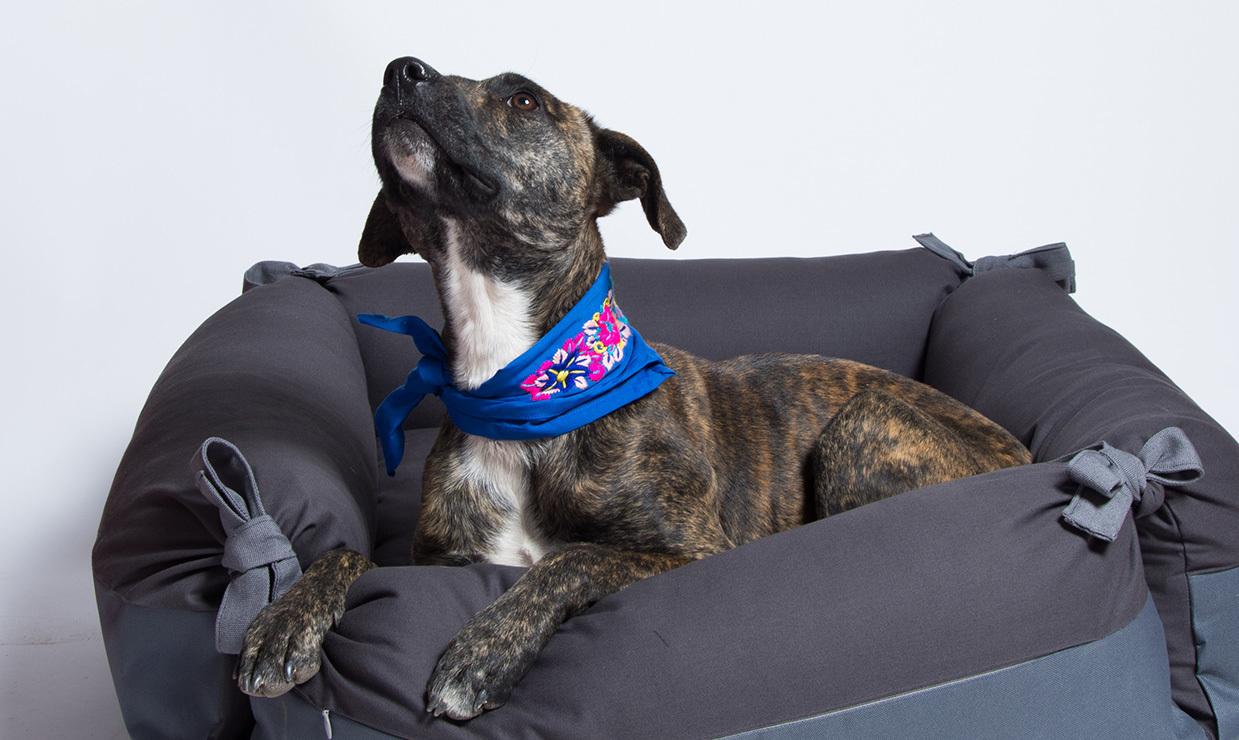 Canuto, accesorios artesanales para consentir a tu perro