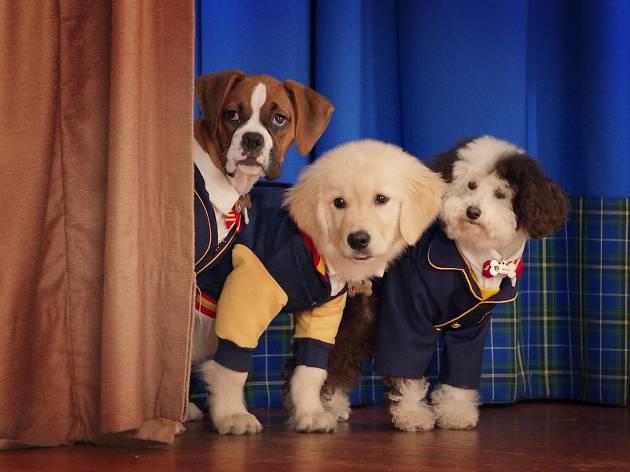 Academia de cachorros: Temporada 1