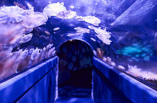 Jellyfish in domed tank walkway