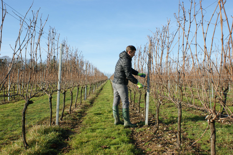 Black Chalk vineyard, Hampshire