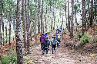 Famílias na floresta sintra