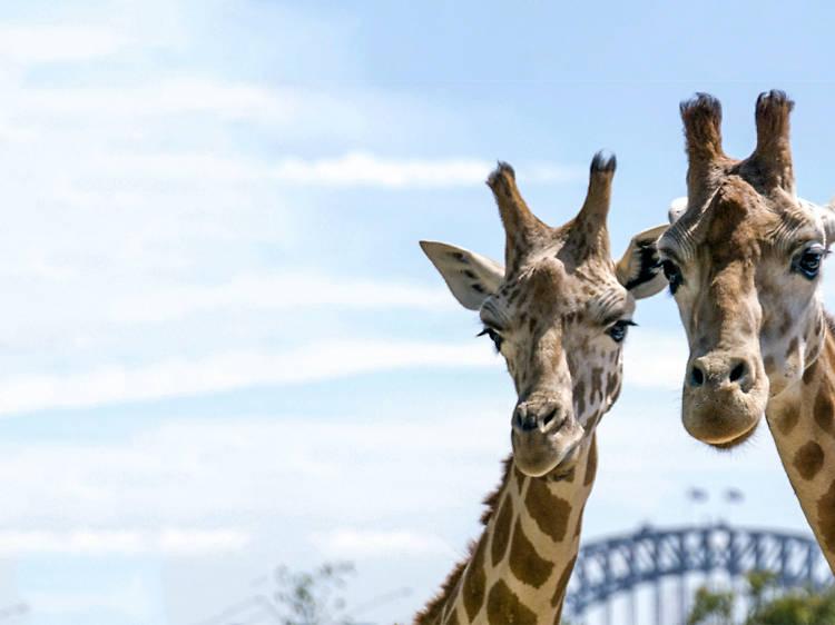 Hang out with animals via Taronga TV