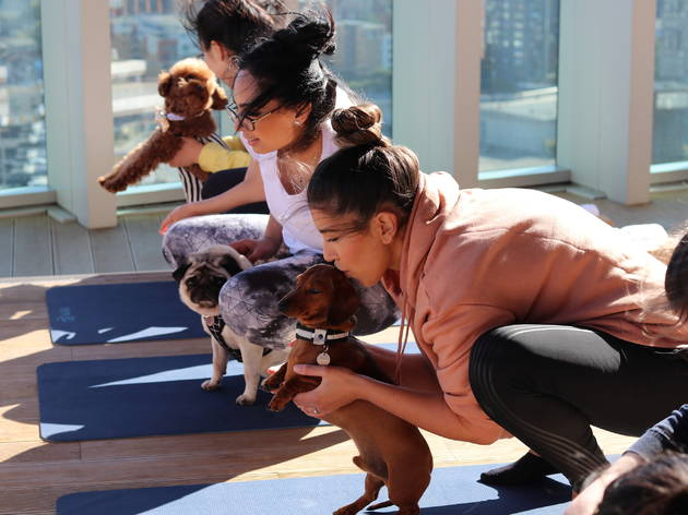 Doga - dog yoga in London