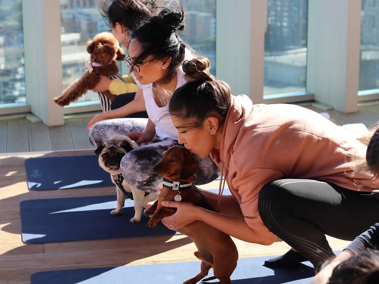Practice your downward dog at Doga