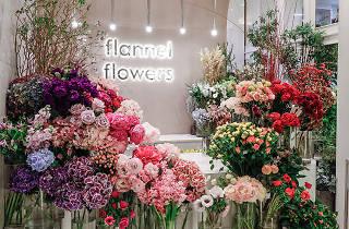 flannel flowers_pr_08022020