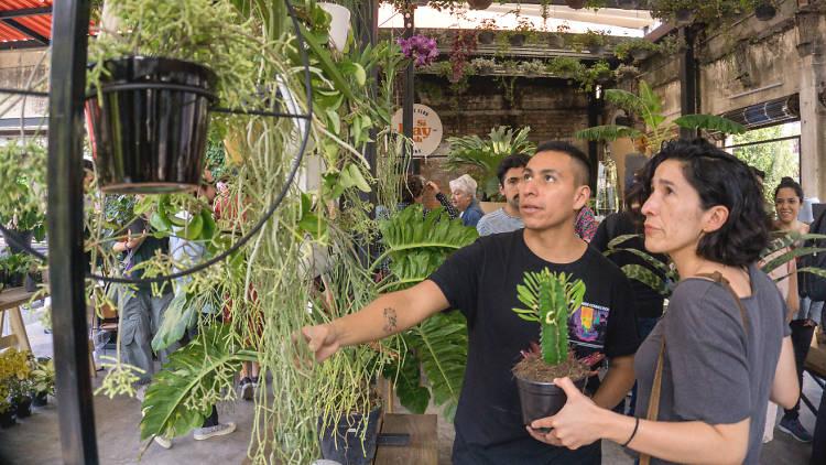 Botánica Juárez