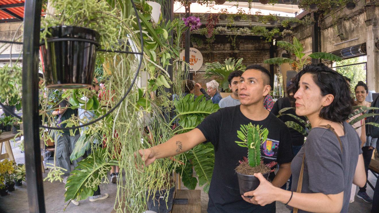 Botánica Juárez, un bazar con más de mil tipos de plantas