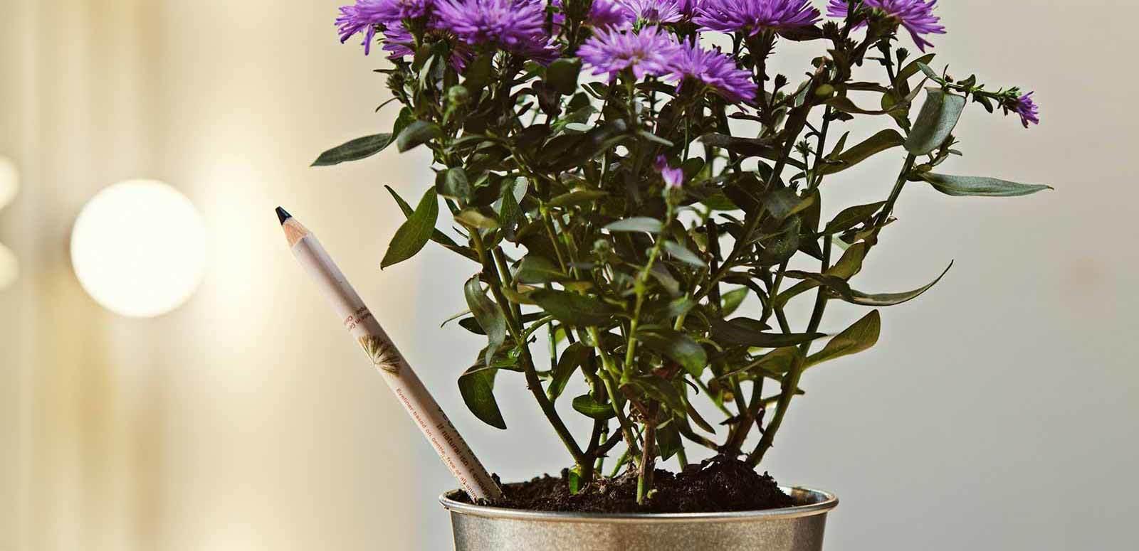 Sprout lapiceros ecológicos para plantar