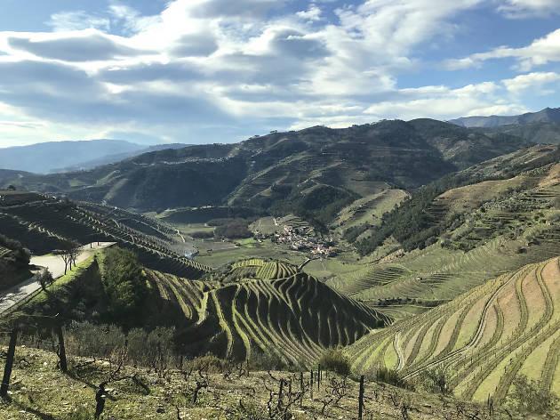 Douro, vinhas