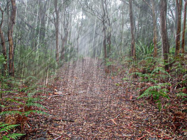 Rain falling in the bush