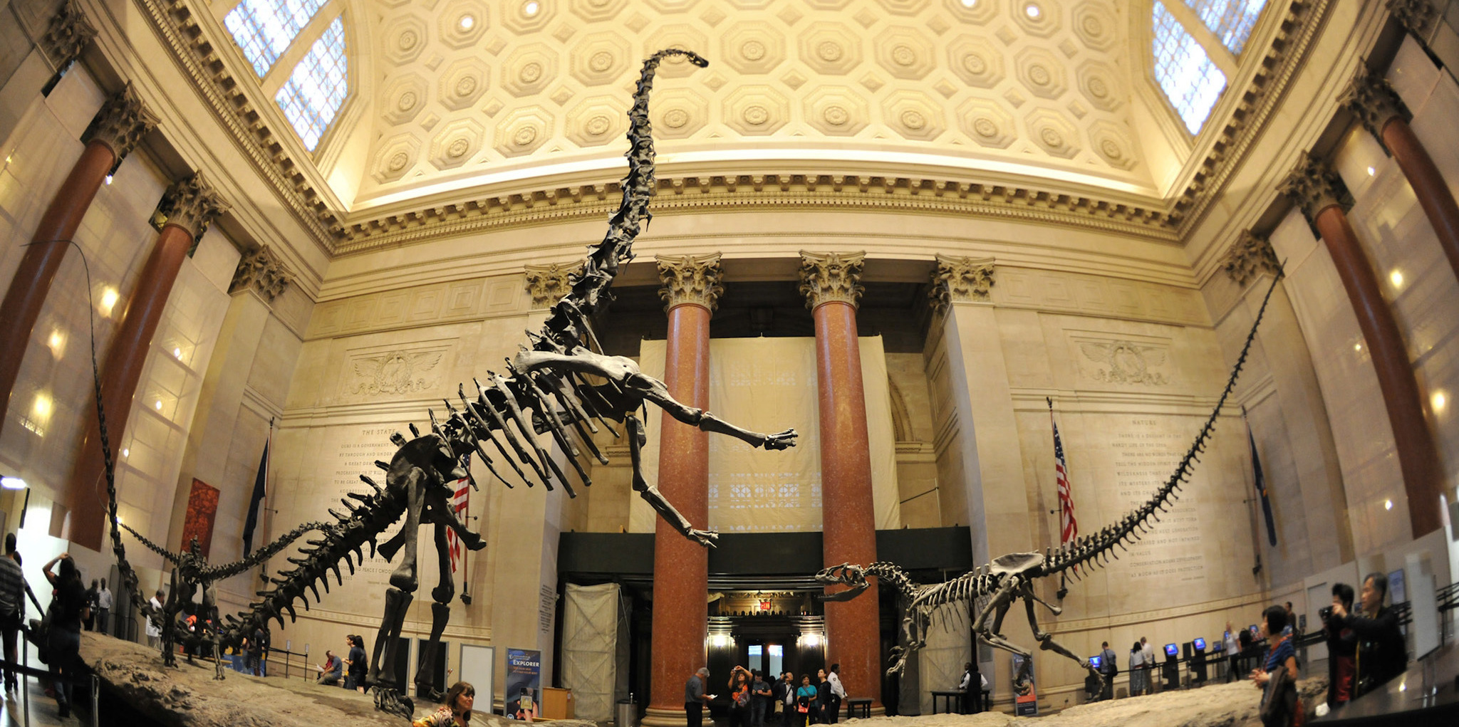 American Museum of Natural History's Dinosaur Halls