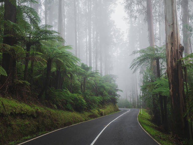 You can visit this magical forest just an hour outside Melbourne