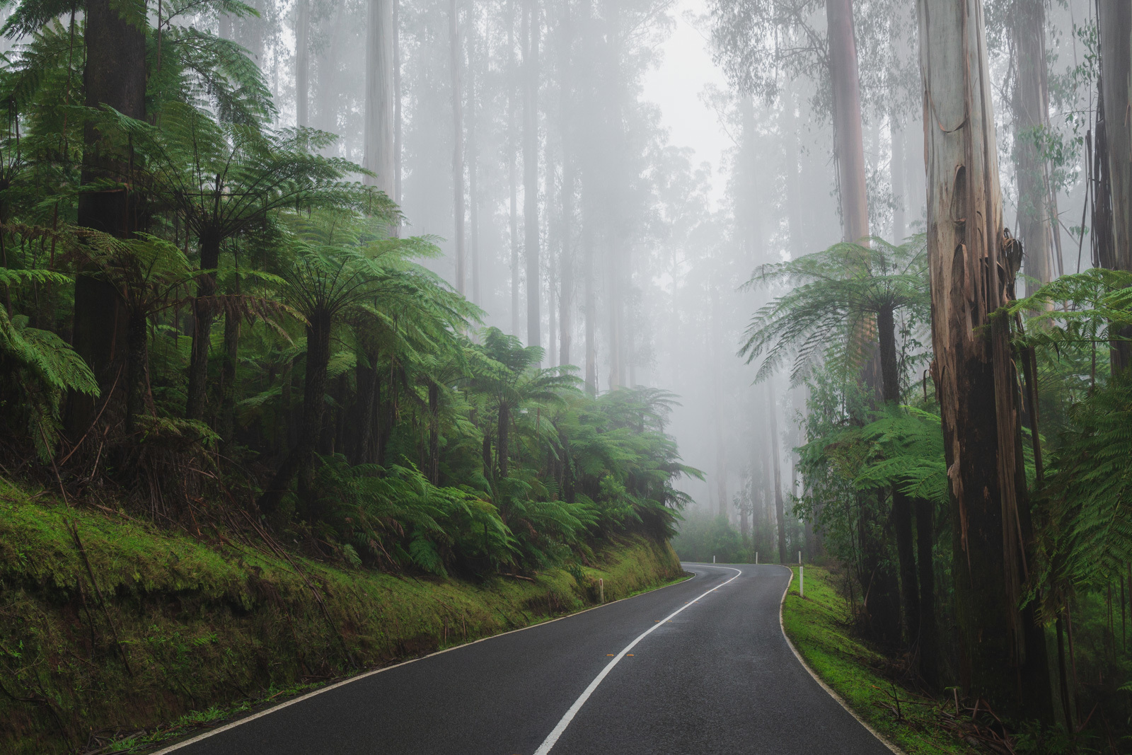 Road surrounded by trees in Warburton Victoria