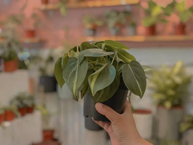 Tumbleweed Plants