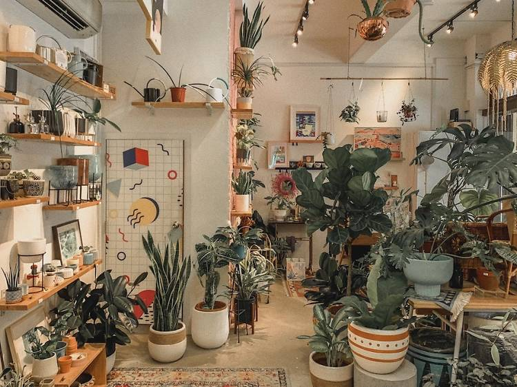 The best plant shops in Singapore for indoor plants and more