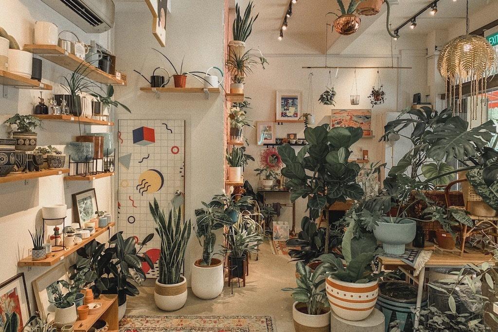 The guide to indoor plants in Singapore