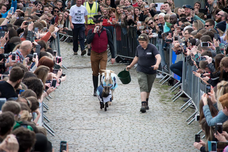 The Oxford v Cambridge Goat Race