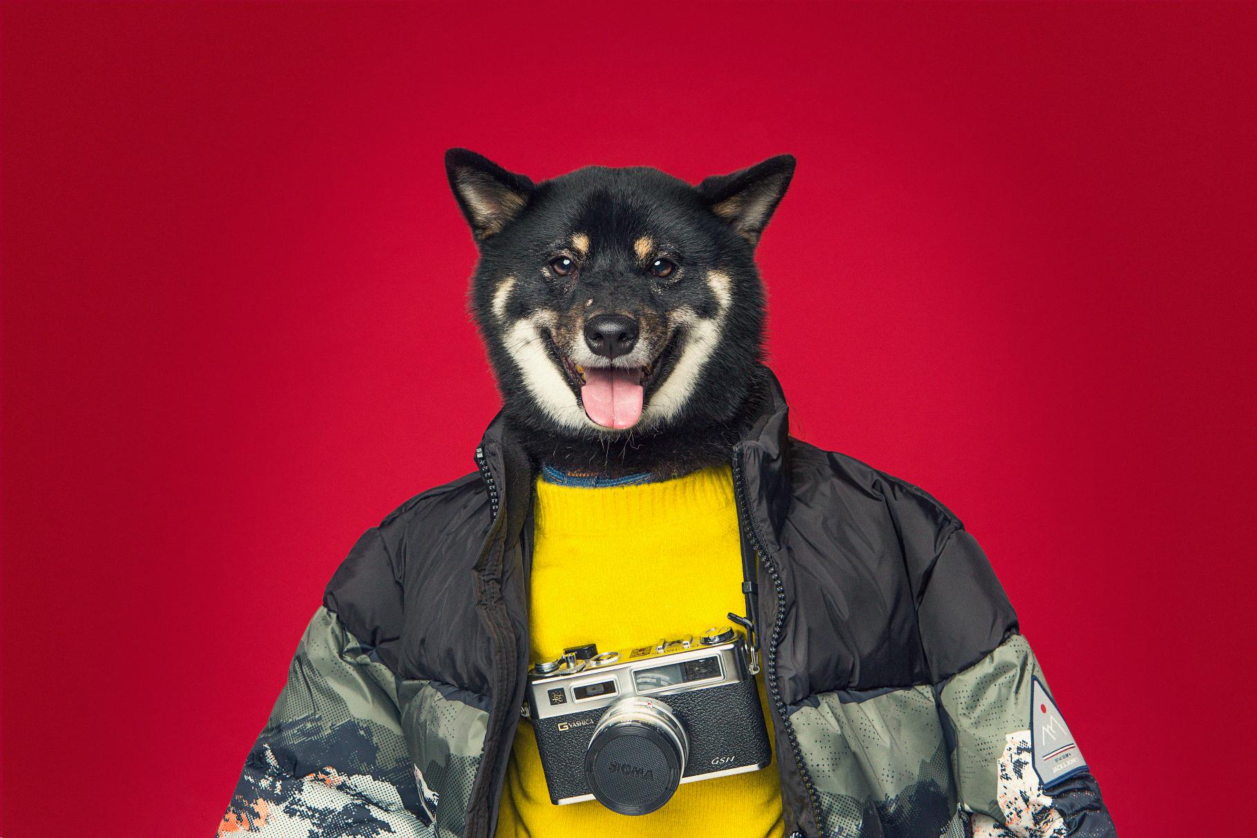 Zalora x Hong Kong Dog Rescue campaign