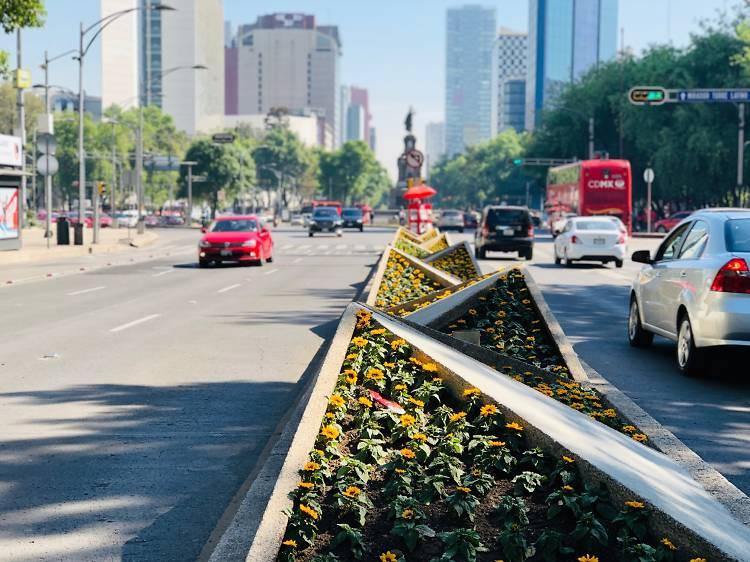 Girasoles en Reforma