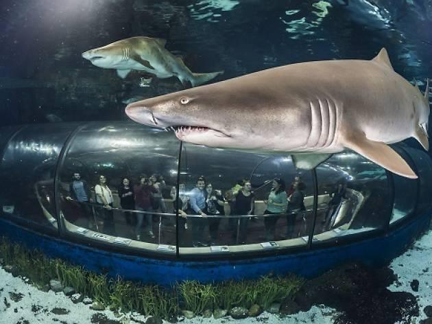 Túnel de tiburones en el Aquarium