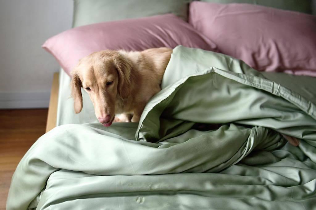 Sunday Bedding