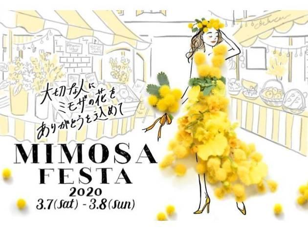 MIMOSA FESTA