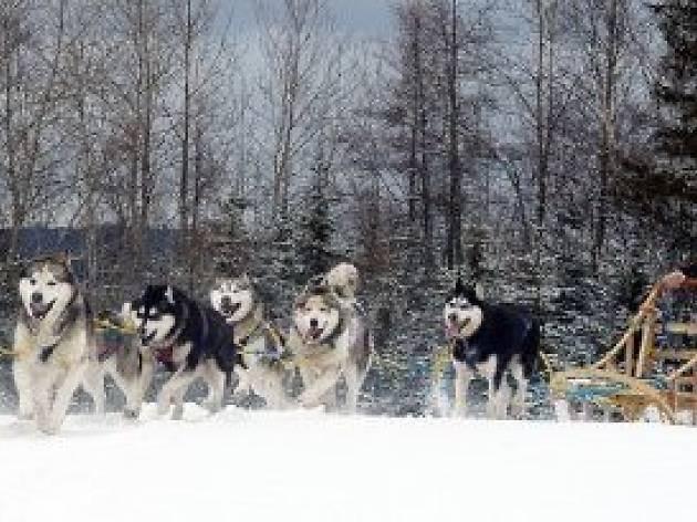 Expédition Wolf
