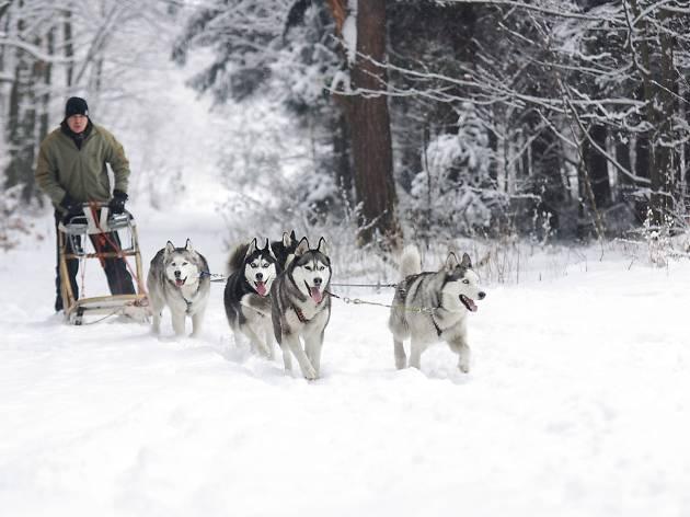 Randonnées en traîneau à chiens / Dog sledding