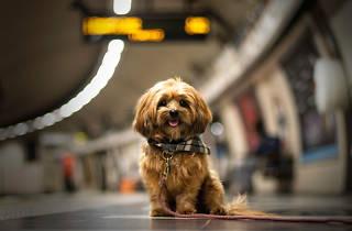 Dog-friendly London Underground