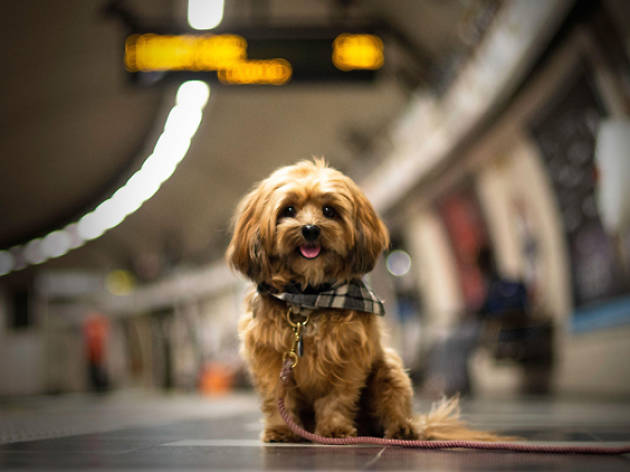 The London Underground is officially the world's most dog-friendly subway
