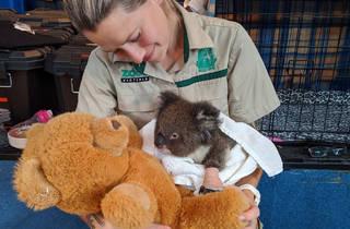 Fiona Melvin and koala