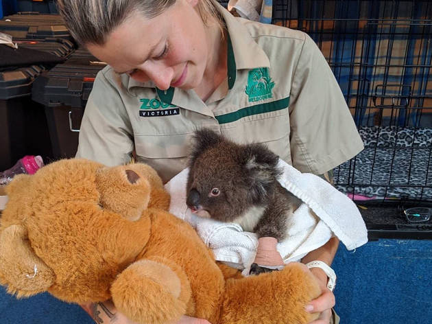Things you only know if you're a zookeeper in a bushfire zone