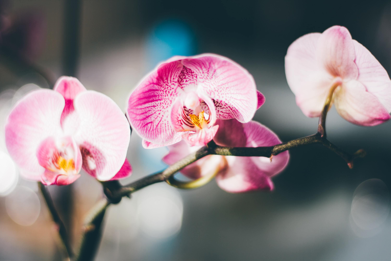 Cheira bem, cheira a Orquídeas da Colômbia no Zoo de Lisboa