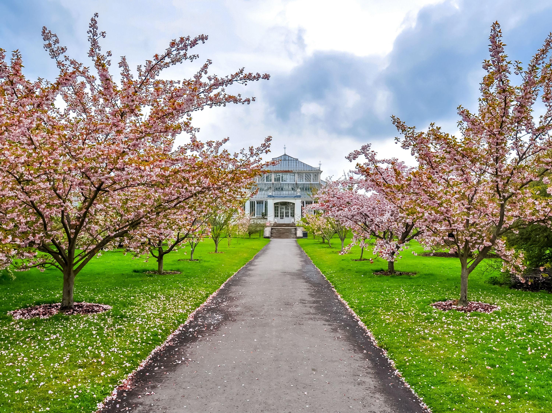 Kew Gardens will reopen next week