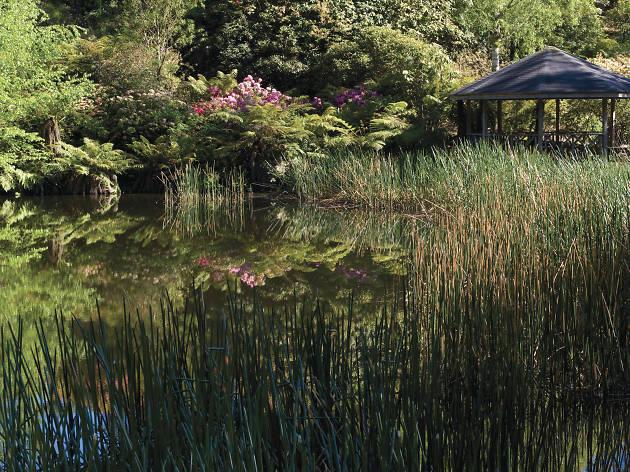 Dandenong Ranges Botanic Garden Lake (formerly National, Rhododendron Gardens)