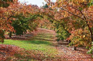 Dandenong Ranges Botanic Garden (formerly National Rhododendron Garden)