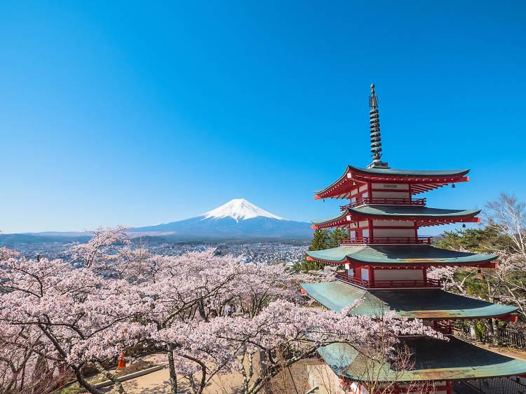 Mar 18-25, Yamanashi
