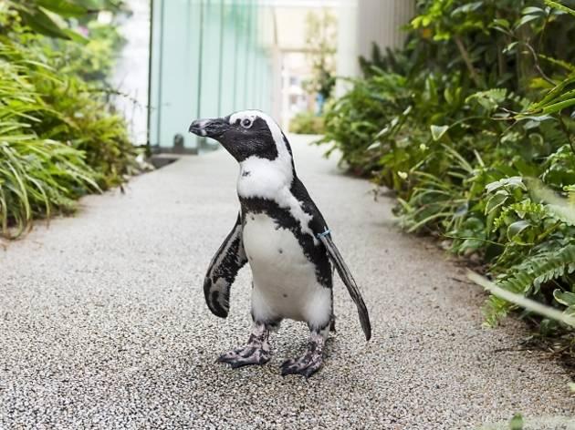 """""""世界ペンギンの日""""in サンシャイン水族館~SAVE THE PENGUIN CAMPAIGN~"""