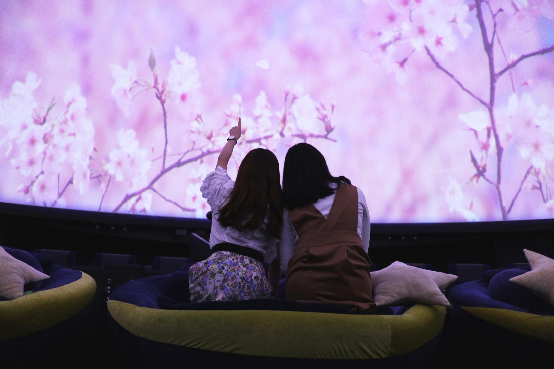 Hanami at the Planetariumプラネタリウムでお花見を。