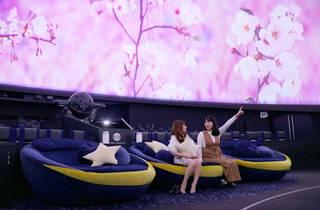 Hanami at the Planetarium プラネタリウムでお花見を。