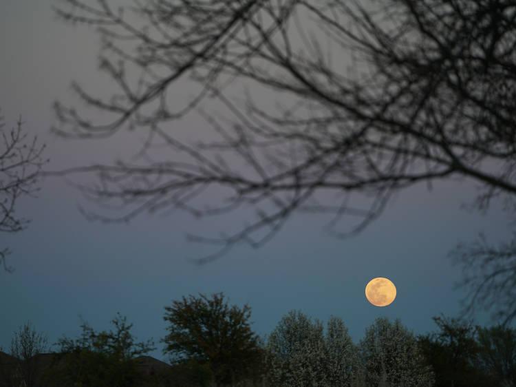 October 20: Hunter's Moon